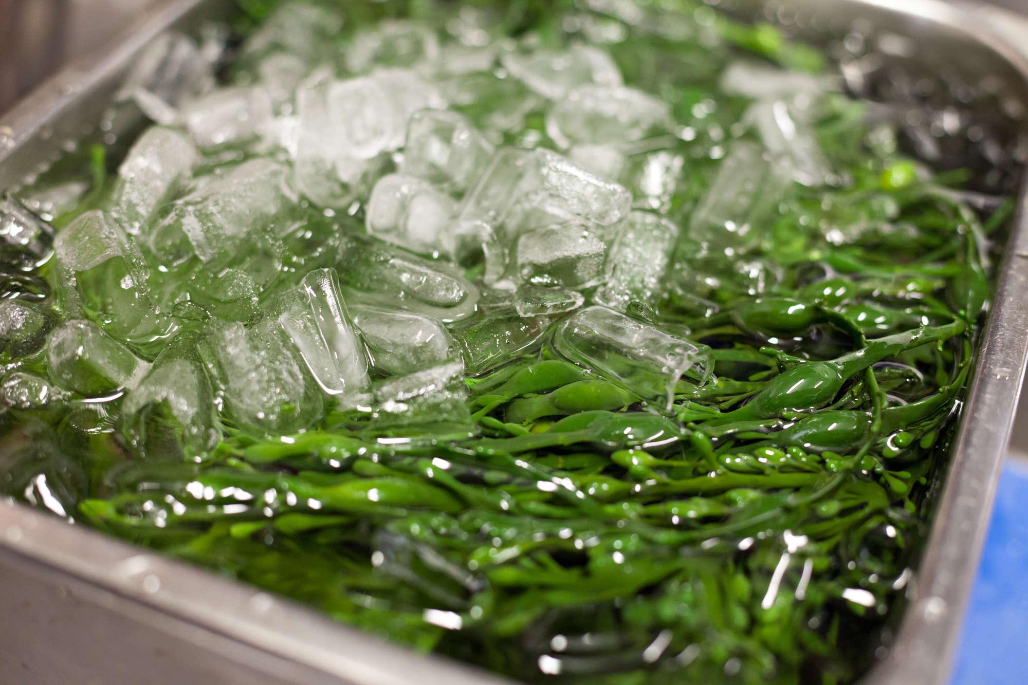 Refreshing Seaweed for Oyster Garnish